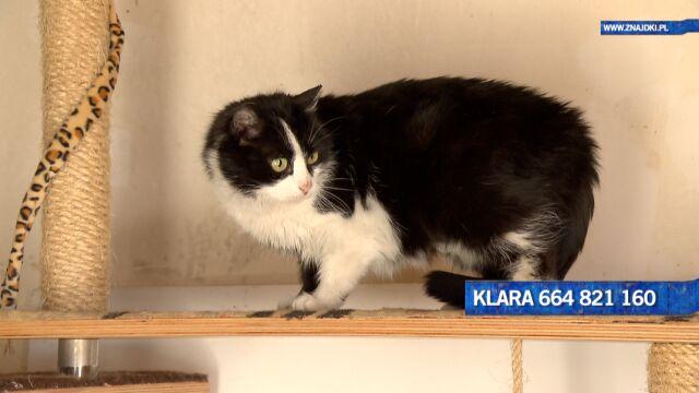 Klara to podopieczna Fundacji Znajdki Przytulisko koło Radzymina