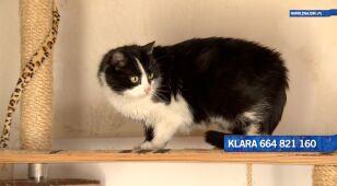 Klara szuka nowego domu