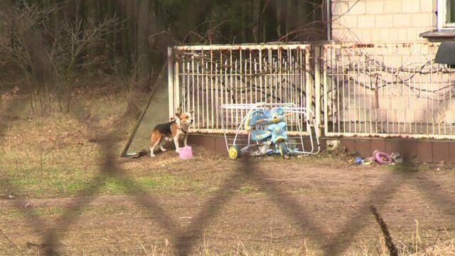 Kobieta dotkliwie pogryziona przez psy. Lekarze uratowali jej nogę