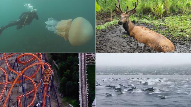 Uparte pingwiny czy meduza wielkości człowieka? Wybierz najciekawsze wideo tygodnia tvn24.pl