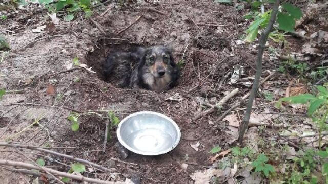 The dog was buried alive in a forest in Huta Komorowska (Subcarpathian voivodeship)