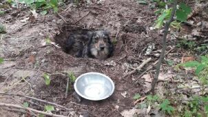 Police detained the man who buried his dog alive