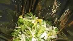 Resztki warzyw w osobnym koszu na śmieci