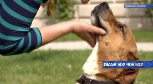 Diana szuka nowego domu