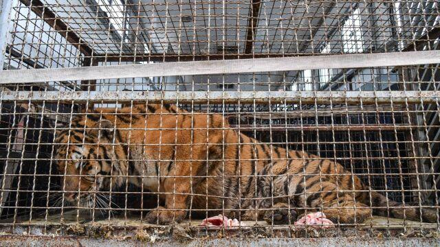 Dyrektor zoo w Poznaniu: transport powinien był zostać zatrzymany zaraz po wjeździe do Polski