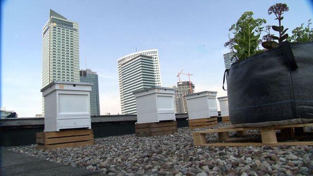 Dach pełen pszczół
