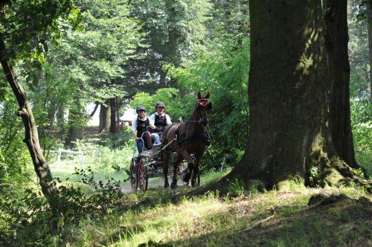 Gnali przez las