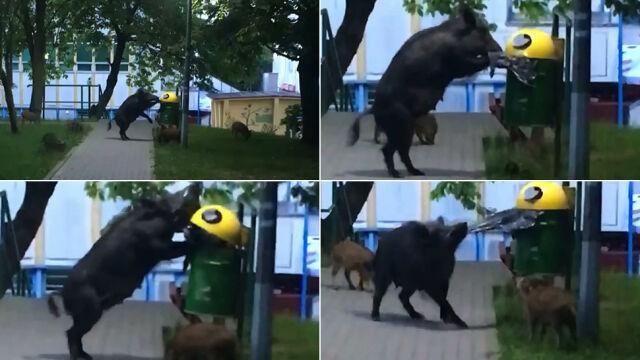 Sprytna locha w Sopocie skradła wasze serca. Wybraliście najciekawsze wideo tygodnia tvn24.pl
