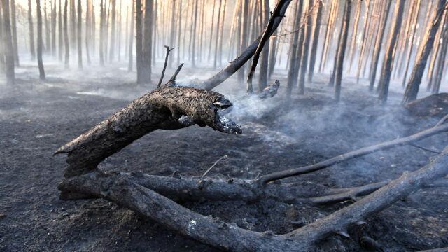 Duży pożar lasu na Mazowszu