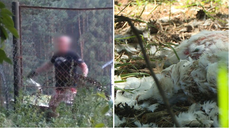 Dziesiątki martwych kurczaków za płotem fermy. Policja prowadzi postępowanie