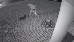 Pies podaje kręgiel, właściciel rzuca w budynek. Straty: 60 tysięcy złotych