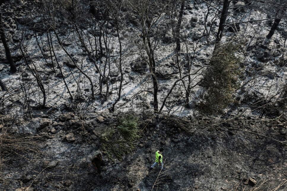 Spalony las w Libanie