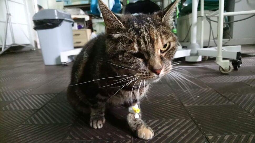 Toffi odnalazła się po sześciu latach tułaczki. Ledwo uszła z życiem, ale wróciła do domu