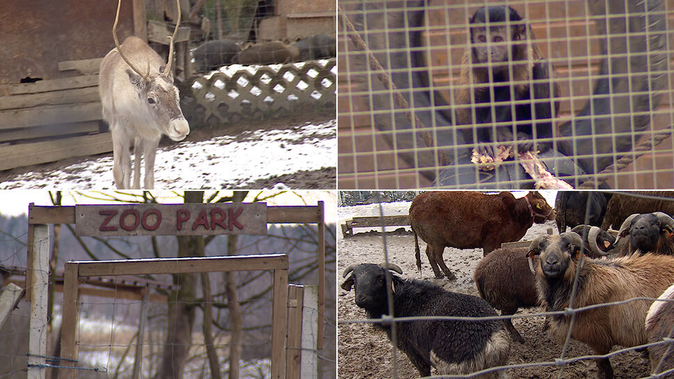 Interwencja Animalsów W Przykościelnym Minizoo Warunki Straszne