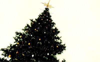 Pytania o symbole w bożonarodzeniowej tradycji