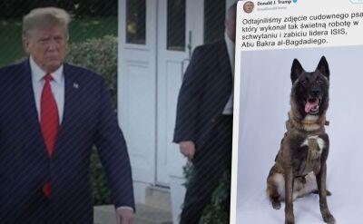 Został ranny w pościgu za Bagdadim, Trump ujawnił jego zdjęcie
