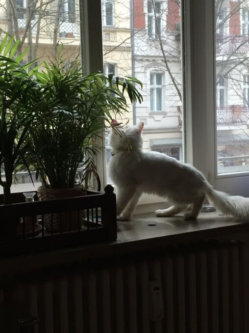 Kunkush zza okna obserwuje Berlin