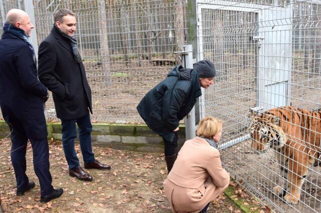 Uratowała tygrysy, straciła część premii