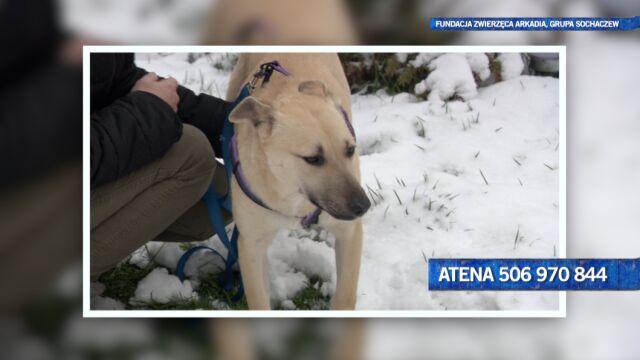 Atena jest podopieczną Fundacji Zwierzęca Arkadia, Grupa Sochaczew