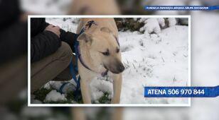 Szukamy domu dla Ateny