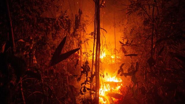 Setki nowych ognisk pożaru w Amazonii. Wojsko mówi o gotowości żołnierzy, planów nie ujawnia