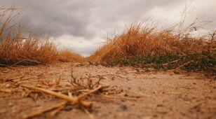 Jak rząd walczy z suszą