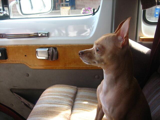 Ugotował psa w samochodzie