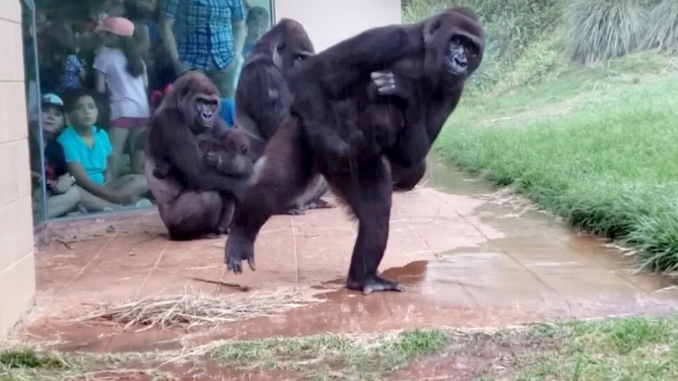 Goryle w deszczu zdeklasowały rywali