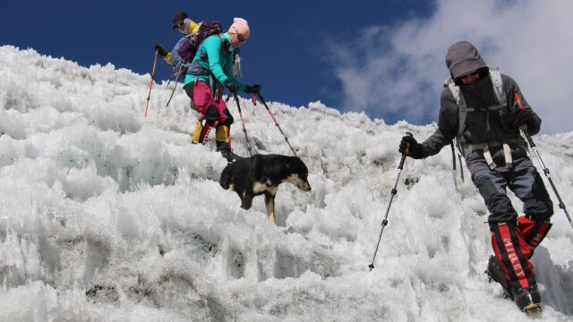 """""""Jeśli z nami pójdzie, na pewno umrze"""". Mera, pies, który zdobył himalajski szczyt"""