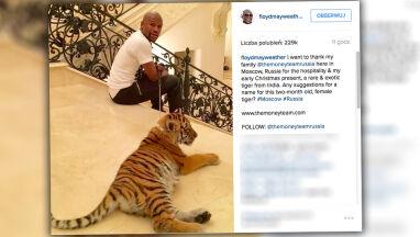Mayweather kontra Tiger.