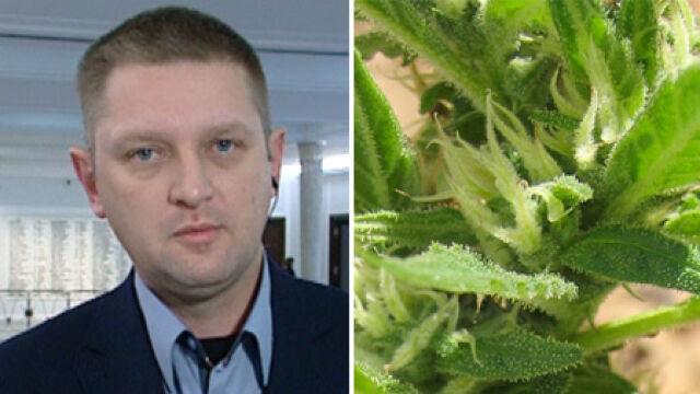 Poseł Palikota: Jestem sporadycznym użytkownikiem marihuany