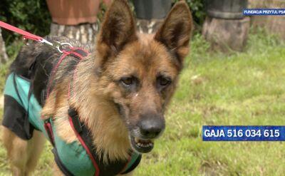 Gaja szuka nowego domu