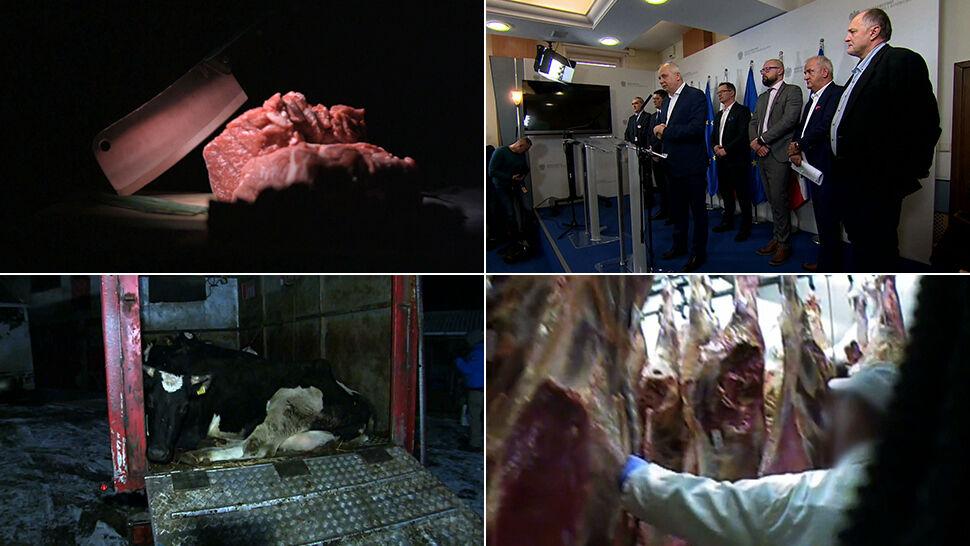 Afera z ubojem chorych krów to jednostkowy przypadek?