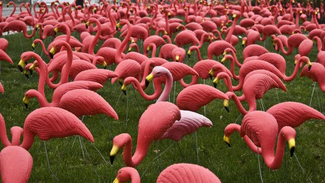 Dał światu plastikowe różowe flamingi. Donald Featherstone nie żyje