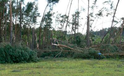 Ponad 300 ha powalonych drzew