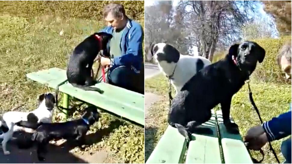Trzy psy znalezione na przystanku autobusowym. Były przywiązane do ławki