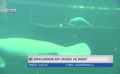 We wrocławskim zoo urodził się manat