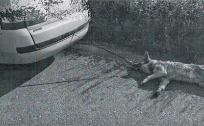 Wlókł swojego psa za samochodem