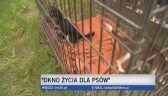Ruszyło okno życia dla psów
