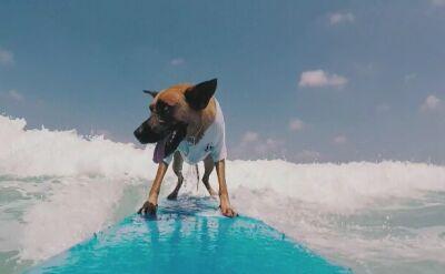 Poly - surfujący pies z Izraela