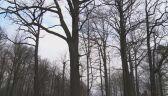 Nielegalna wycinka drzew w Katowicach