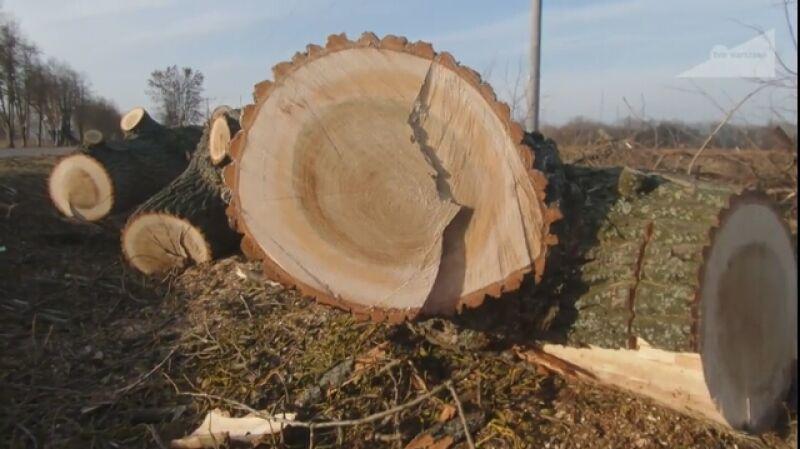 Wycięto drzewa w Konstancinie