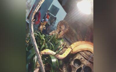 Egzotyczne zwierzęta w katowickim mieszkaniu