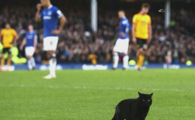Kot przerwał mecz Everton - Wolverhampton