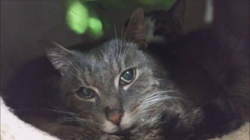 Inuś i Klapuś - porzucone koty w Schronisku na Paluchu