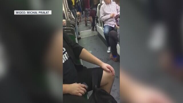 Amstaff w tramwaju