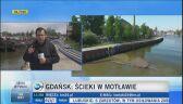 Gdańsk: ścieki w Motławie