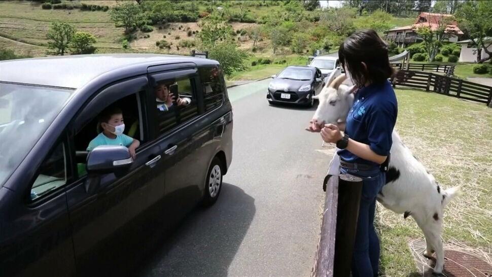 Wizyta w zoo, w kinie, a nawet ślub. Samochodowe życie w czasie pandemii