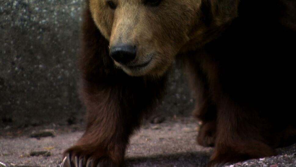 Niedźwiedzie z warszawskiego zoo zostaną przeniesione