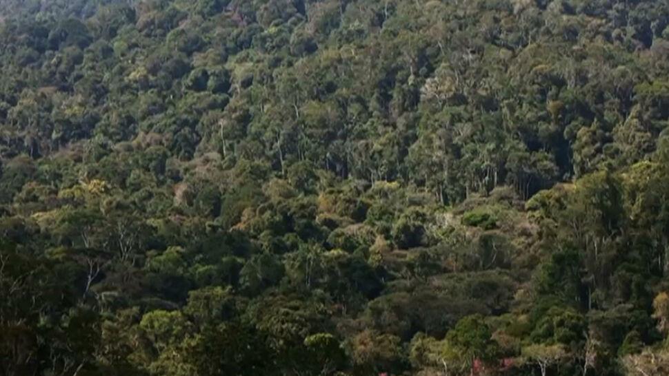 """""""W pewnej zapomnianej dolinie udało się odkryć las pierwotny"""". Polscy badacze ruszają na Madagaskar"""